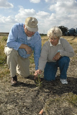 NRCS Soil Conservationist Technician Jeanne Krull (right) monitors the growth of a Black Hills Spruce planted on John Laflen�s property in Buffalo Center last spring. Krull provided technical assistance in implementing Laflen�s living snow fence and snow catch area.