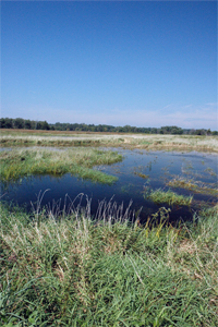 Heavy August rains allowed wetland areas to fill with water, attracting more water fowl.
