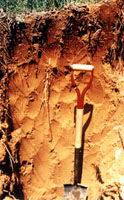 Photo of windsor soil profile