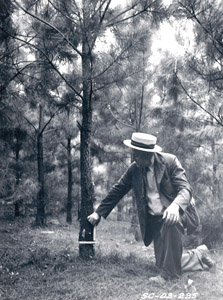 Moore, SC, 1941: These loblolly pines were planted in 1935 on badly eroded and steep land. Dr. Bennett is shown here measuring one tree which is six inches in diameter.
