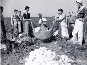 Duncan, SC (Spartanburg County), 1942: Charles Hammond, Spartanburg merchant, is shown weighing cotton picked by 300 Wofford College students.