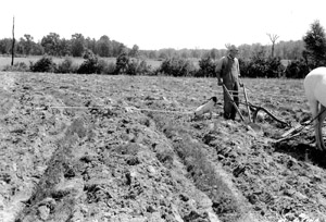 Fairfield, SC, 1940: Construction of contour furrows in a pasture.
