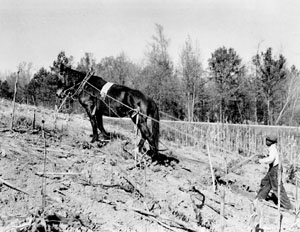 "Edgefield, SC, 1952: James Edward Simpkins has ""up hill going� to sow grain on this steep land belo"
