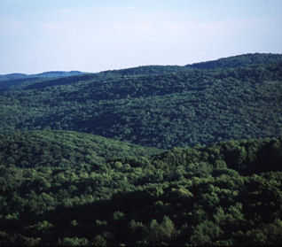 Picture of a Healthy Forest