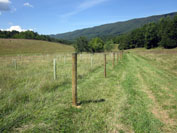 Stream exclusion fencing and tree plantings completed with CREP funding.