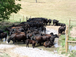Stream crossing for cattle on Poague Run near Staunton, VA.