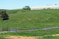 After: Exclusion fencing and a grassed buffer will keep cattle away from these areas.