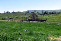After: Exclusion fencing will help keep cattle out of the spring that forms the headwaters of Smith