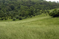 Large open pastures, poor water placement and invasive weeds.