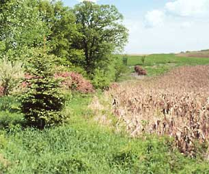 Photo of a wildlife food plot.