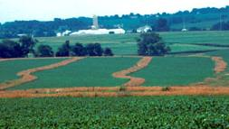 Conservation buffers on a Wisconsin farm protecting highly erodible land.