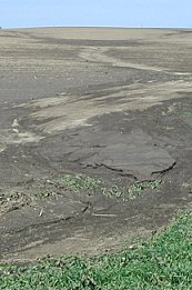 Photo of soil washed down.