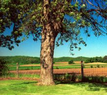 Photo of landscape in Pepin County, Wisconsin.