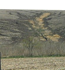 Photo of ephemeral erosion on soybean fields.