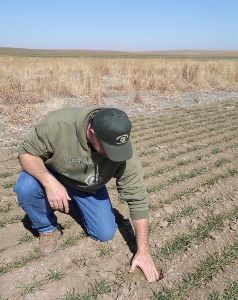 Bryan Gottshalk digs hand into soil that was previously enrolled in CRP