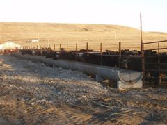 A fenceline bunk feeder installed to increase the separation distance of cattle from the creek.