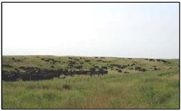 Photo: Grazing land