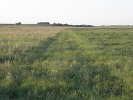 Differences in grass residue achieved by patch burning