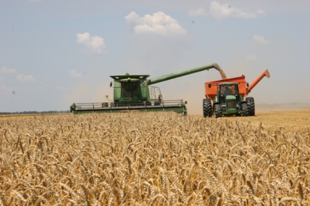 Harvesting wheat photo