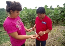 Landowner and Matthew Wung, NRCS Soil Conservationist test soils in banana plantation near Hilo, HI.