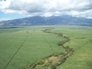Photo of agricultural land in Maui.