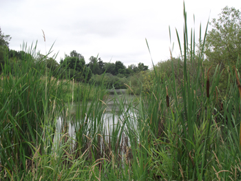 Wetland Restoration in Marion County