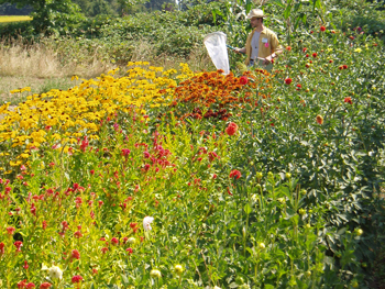 Mace Vaughn, of the Xerces Society, samples a Sauvie Island organic farm's pollinator hedgerow