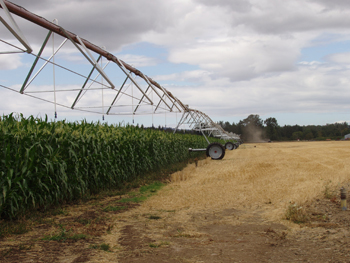 A linear irrigation system installed to improve irrigation efficiencies.