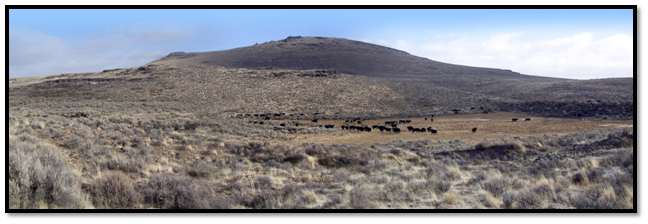 AFTER:  Invasive juniper were removed from this sagebrush steppe community to restore sage grouse habitat in Crook County Oregon
