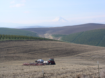 Direct seeding wheat, cherries and Mt. Hood in the background. Photo courtesy of Dusty Eddy, Wasco County SWCD