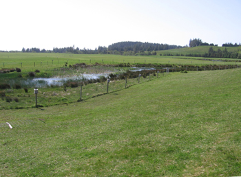 A wetland area is protected to maintain wildlife habitat and water quality