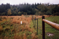 Fences constructed with NRCS assistance to prevent livestock from entering nearby waterways.