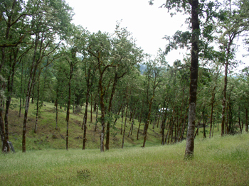 Restoration of the declining oak habitat found throughout Douglas County.