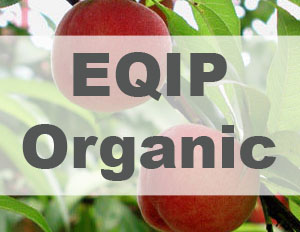 Photo of peaches with EQIP Organic label