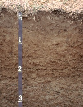 [A profile of a Savannah soil.]