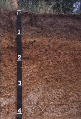 [A profile of a Townley soil.]