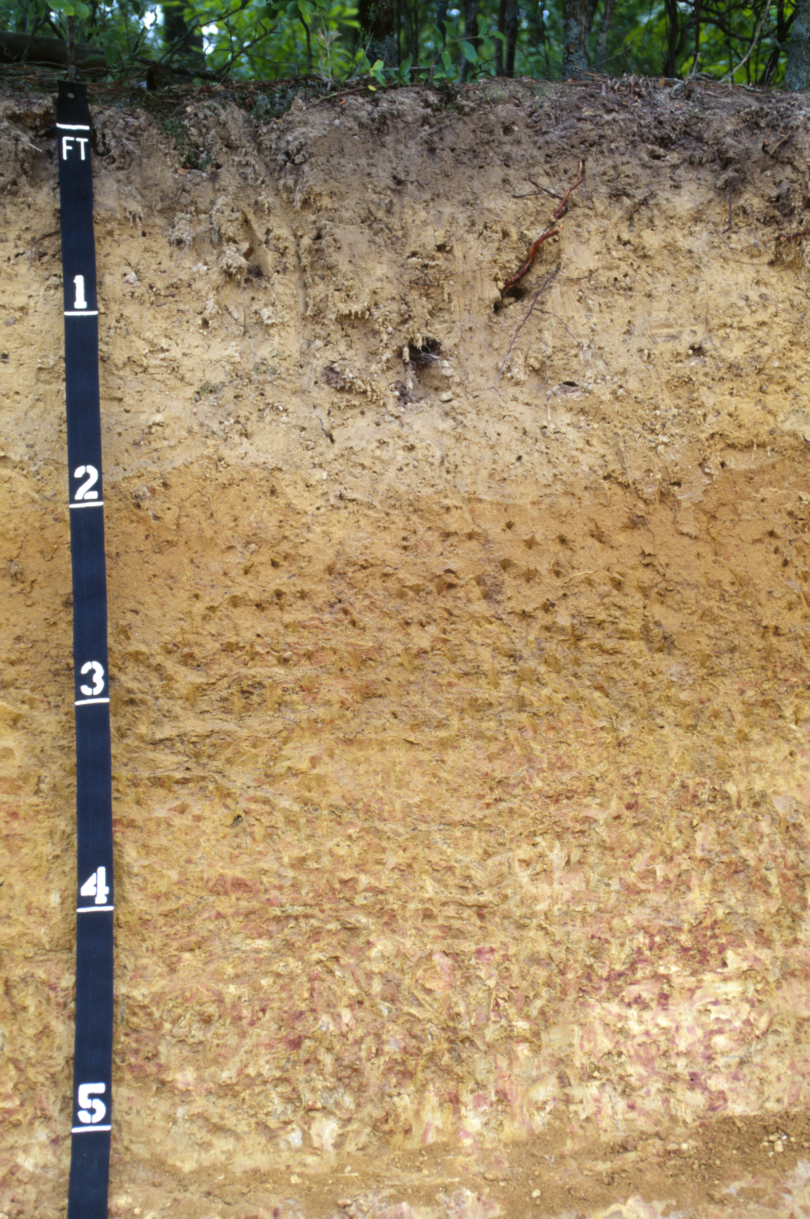 Fuquay soil profile nrcs soils for Soil profile video