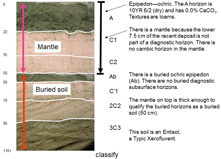 Soil profile having A, C1, C2, Ab, C'1, 2C2, and 3C3 horizons. Side bar text reads: Epipedon--ochric. The A horizon is 10YR 6/2 dry and has 0.0 percent calcium carbonate. Textures are loams. There is a mantle because the lower 7.5 cm of the recent deposit is not part of a diagnostic horizon. There is no cambic horizon in the mantle. There is a buried ochric epipedon (Ab). There are no buried diagnostic subsurface horizons. The mantle on top is just thick enough to qualify the buried horizons as a buried soil (50 cm). This soil is an Entisol, a Typic Xerofluvent.