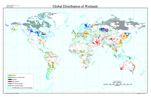 Global Distribution of Wetlands Map