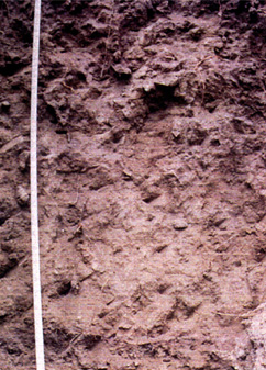 profile of Nevada State Soil