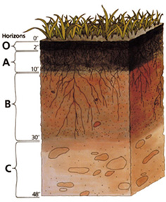 Graphic of a soil profile showing O, A, B, and C horizons.