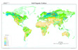 Global Soil Organic Carbon map