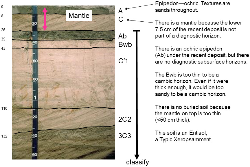 Soil profile having A, C, Ab, Bwb, C'1, 2C2, and 3C3 horizons. Side bar text reads: Epipedon--Ochric. Textures ares ands throughout. There is a mantle because the lower 7.5 cm of the recent deposit is not part of a diagnostic horizon. There is an ochric epipedon (Ab) under the recent deposit, but there are no diagnostic subsurface horizons. The Bwb is too thin for a cambic horizon. Even if it were thick enough, it would be too sandy for a cambic horizon. There is no buried soil because the mantle on top is too thin (<50 cm thick). This soil is an Entisol, a Typic Xeropsamment.>