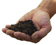 photo of hand holding soil
