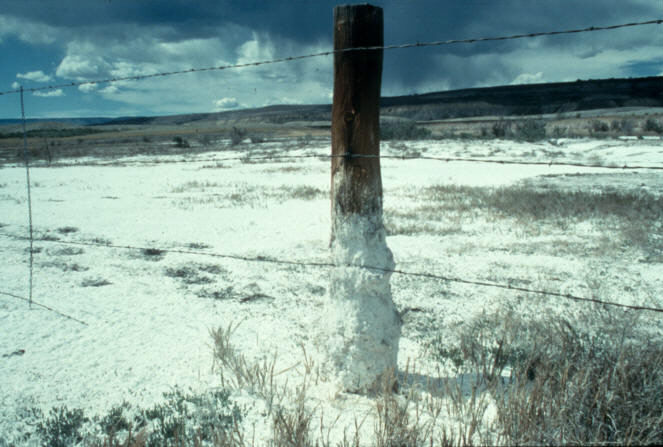 Photograph. As the water evaporates, salts dissolved from the soil deposit and accumulate at the soil surface. Notice the crust of salt deposited on the ground and on the base of the fence post.