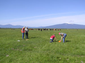 Laying out vegetation transect