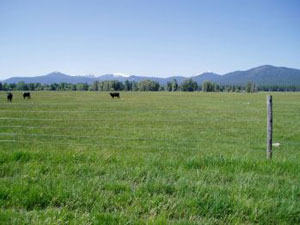 Good grazing management