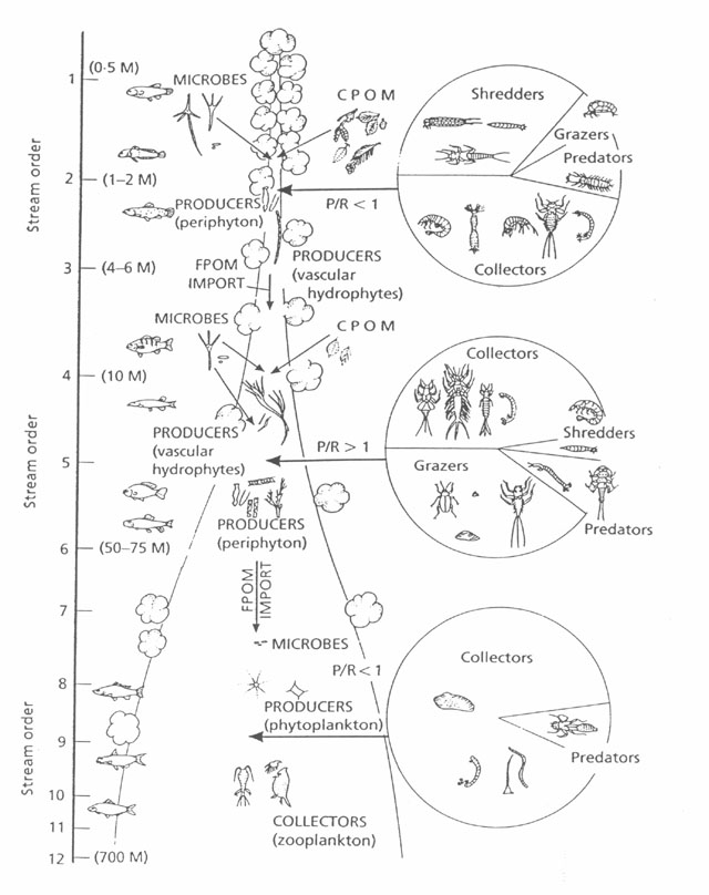 Image showing aquatic organism communities by stream order