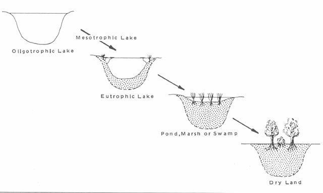 Image showing the eutrophication process