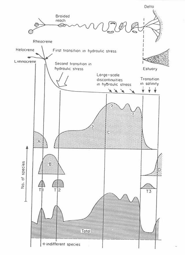 What are the effects of sediment buildup in a river basin?